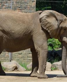 Kirándulás a Nyíregyházi Állatparkban 45