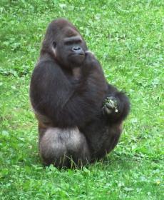 Kirándulás a Nyíregyházi Állatparkban 46