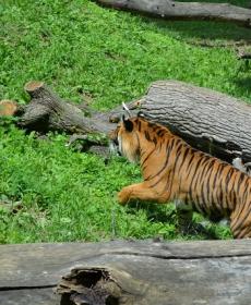 Kirándulás a Nyíregyházi Állatparkban 47