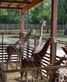 Kirándulás a Nyíregyházi Állatparkban 50