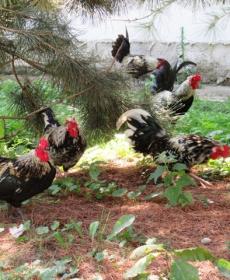 Kirándulás a Nyíregyházi Állatparkban 51
