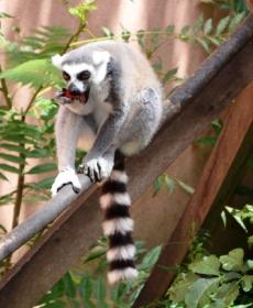 Kirándulás a Nyíregyházi Állatparkban 55