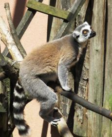 Kirándulás a Nyíregyházi Állatparkban 56