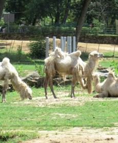 Kirándulás a Nyíregyházi Állatparkban 57