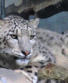 Kirándulás a Nyíregyházi Állatparkban 58