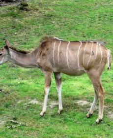 Kirándulás a Nyíregyházi Állatparkban 59