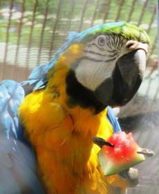 Kirándulás a Nyíregyházi Állatparkban 61
