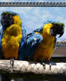 Kirándulás a Nyíregyházi Állatparkban 62